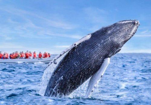 Santuario de ballenas de El Vizcaíno - BAJA CALIFORNIA SUR