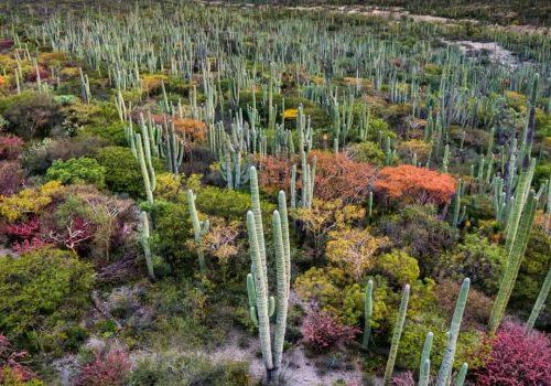 Reserva De La Biosdera Tehuacan Puebla